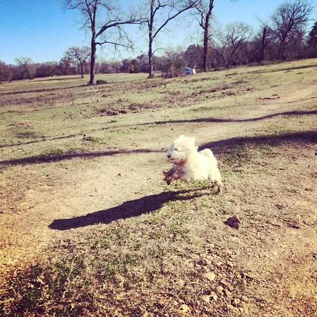 Daisy on the ranch #thenakeddog #austin #hiking #boarding #training #atx #dogsofaustin #dogsofinstagram–posted by thenakeddog on Instagram