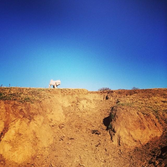 Queen of the hill #thenakeddog #austin #hiking #boarding #training #atx #dogsofaustin #dogsofinstagram–posted by thenakeddog on Instagram