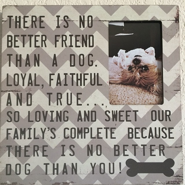 So true!! 🐶💜 –posted by laurengalindo81 on Instagram