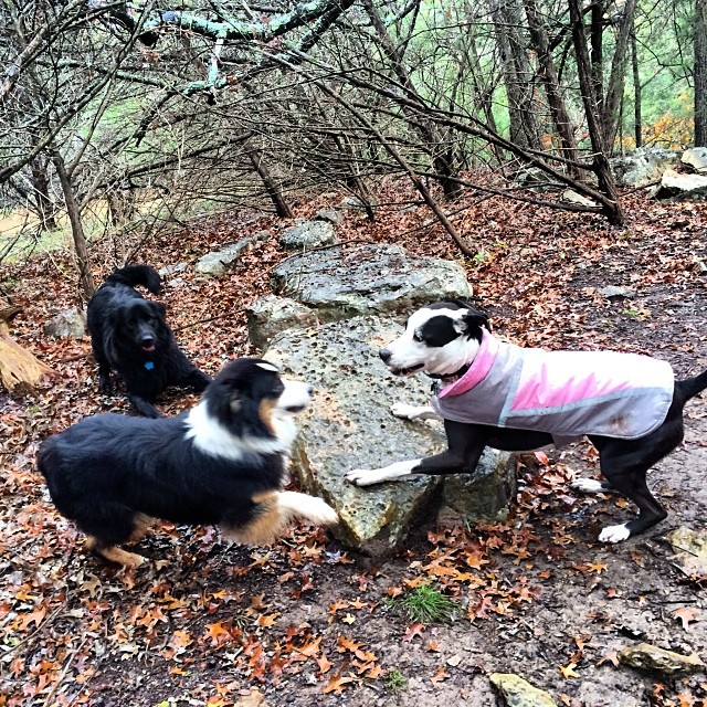 The ever elusive triple play bow! These girls have fun in any weather #thenakeddog #austin #hiking #boarding #training #atx #dogsofaustin #dogsofinstagram–posted by thenakeddog on Instagram