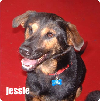 meet the mutts, pt two:     Jessie (shepard/rottie mix?) Born 05/2001    Jessie belonged to my brother and when he was going to move out of state fora few months, he asked if I could keep her for a little while. Of course I said sure, but then his move fell through. By that time, it was too late…she was mine. She is probably the sweetest of all the mutts here, but is scared of her own shadow (typical shepard trait–sorry shepard owners). Since Luke moved in (more about him later) her confidence has really increased…she'll even hop on the couch while people are sitting on it. We're so proud.