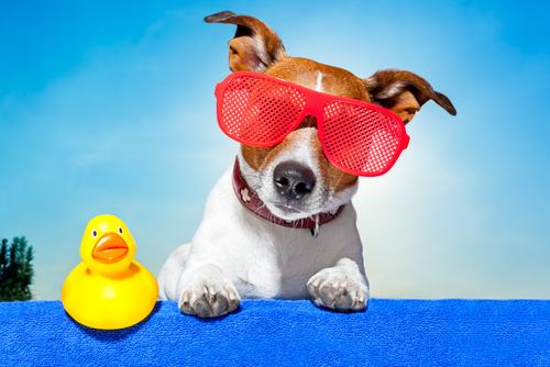 Dog with summer glasses.jpg