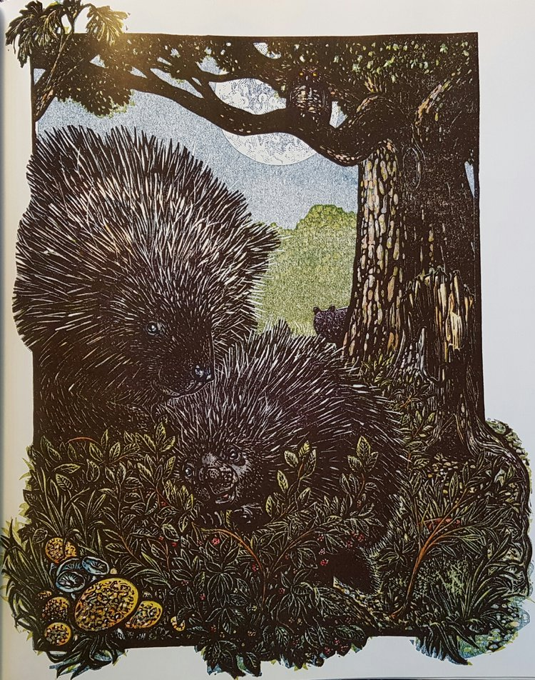 Porcupine illustration from  Dark Emperor , pg 19.