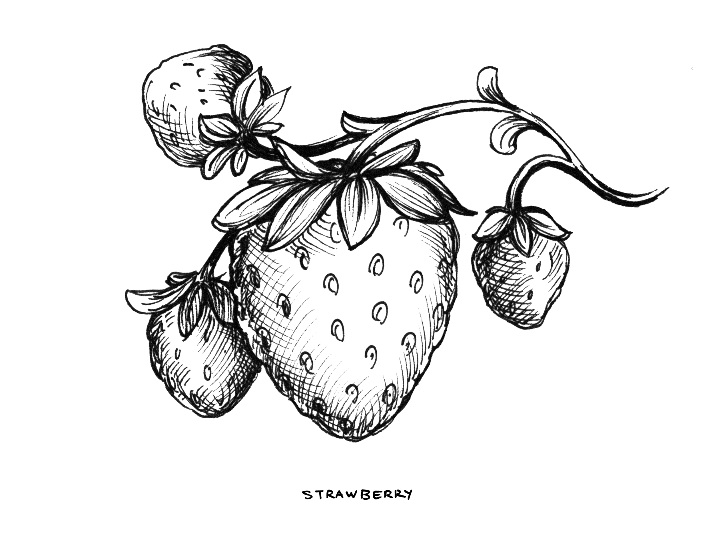 Strawberry_StrainArt.png