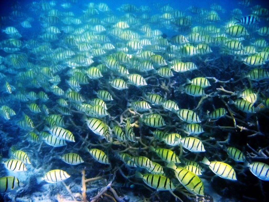 World heritage listed Ningaloo Reef offers unparalleled scuba diving