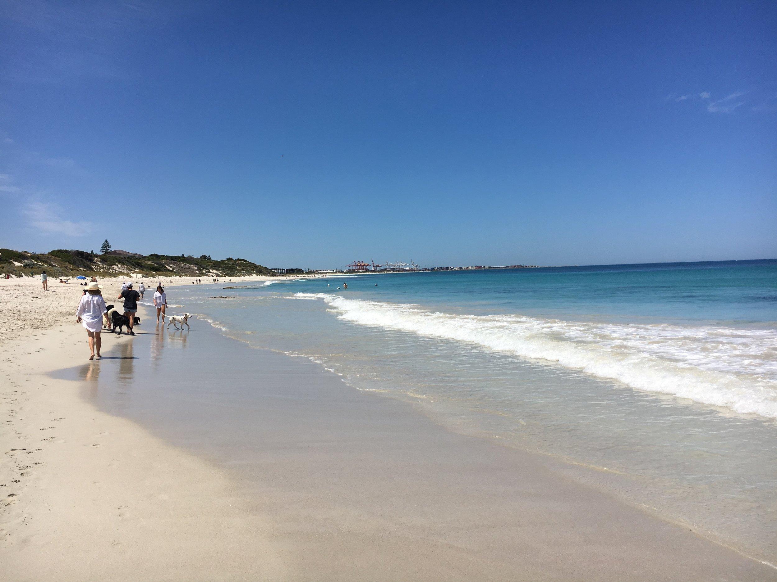 Leighton Dog Beach