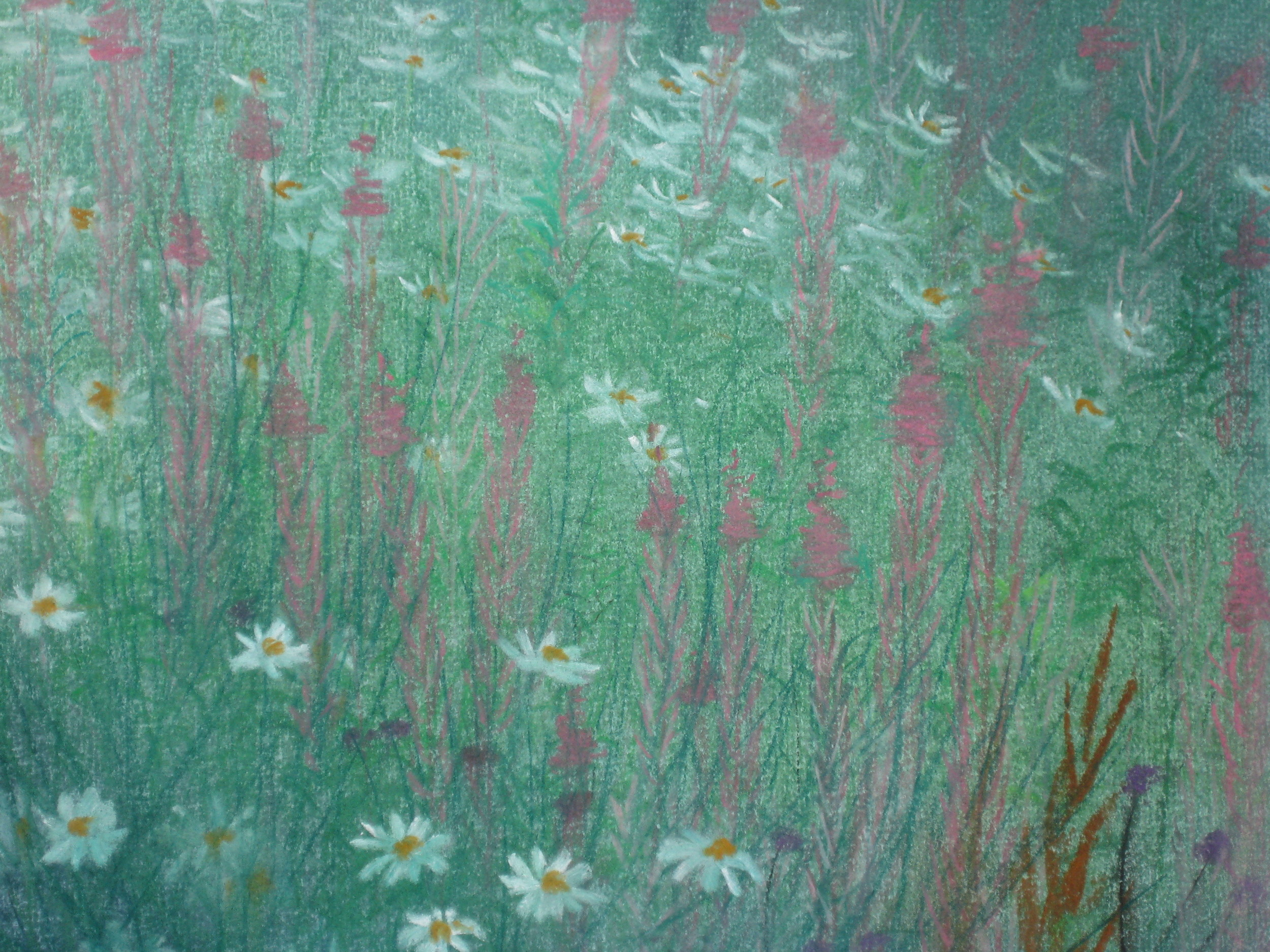 Daisy and Rosebay Willowherb