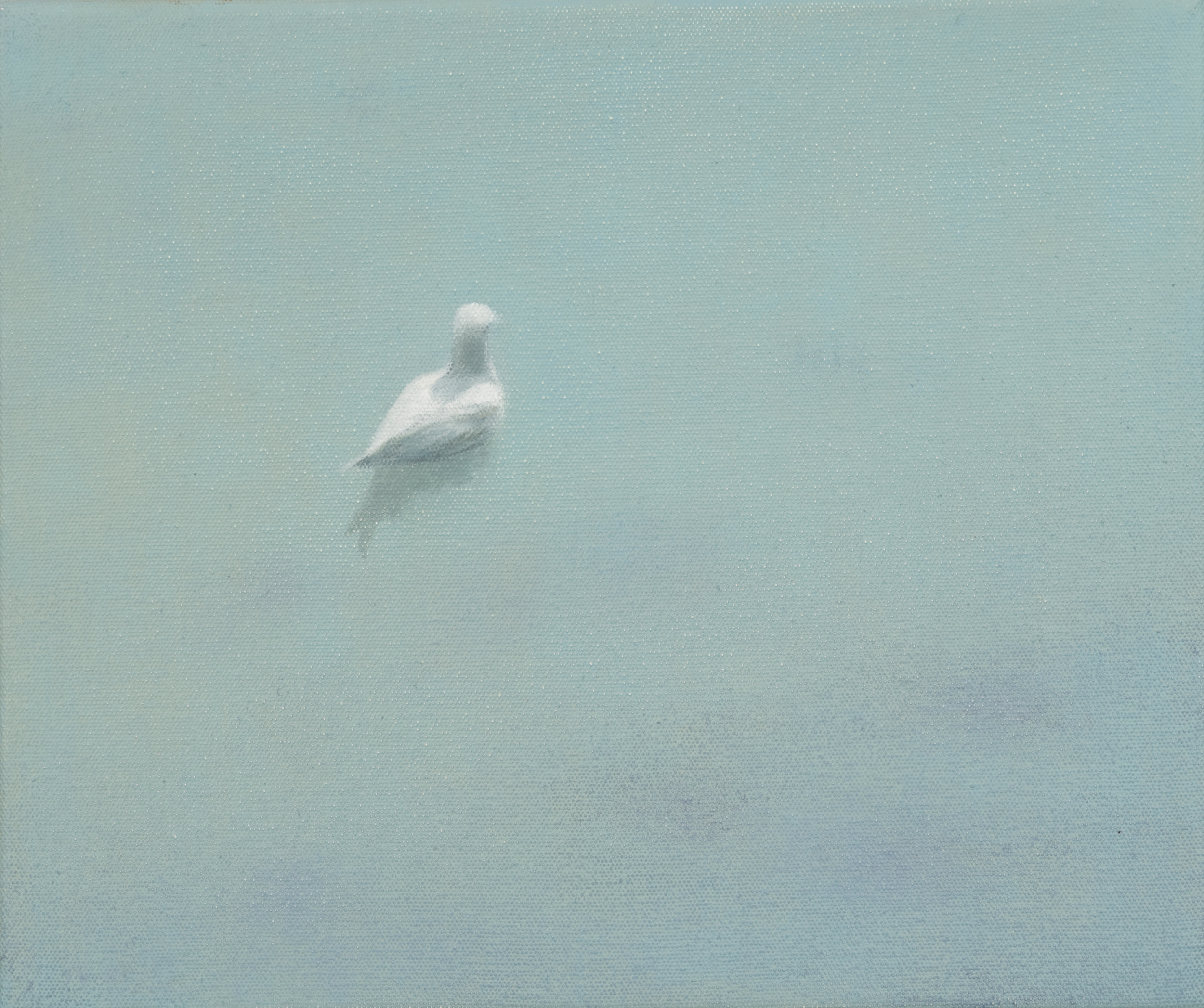 Lone gull swimming