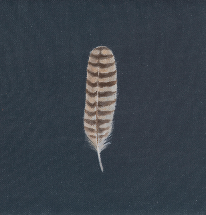 Barred feather