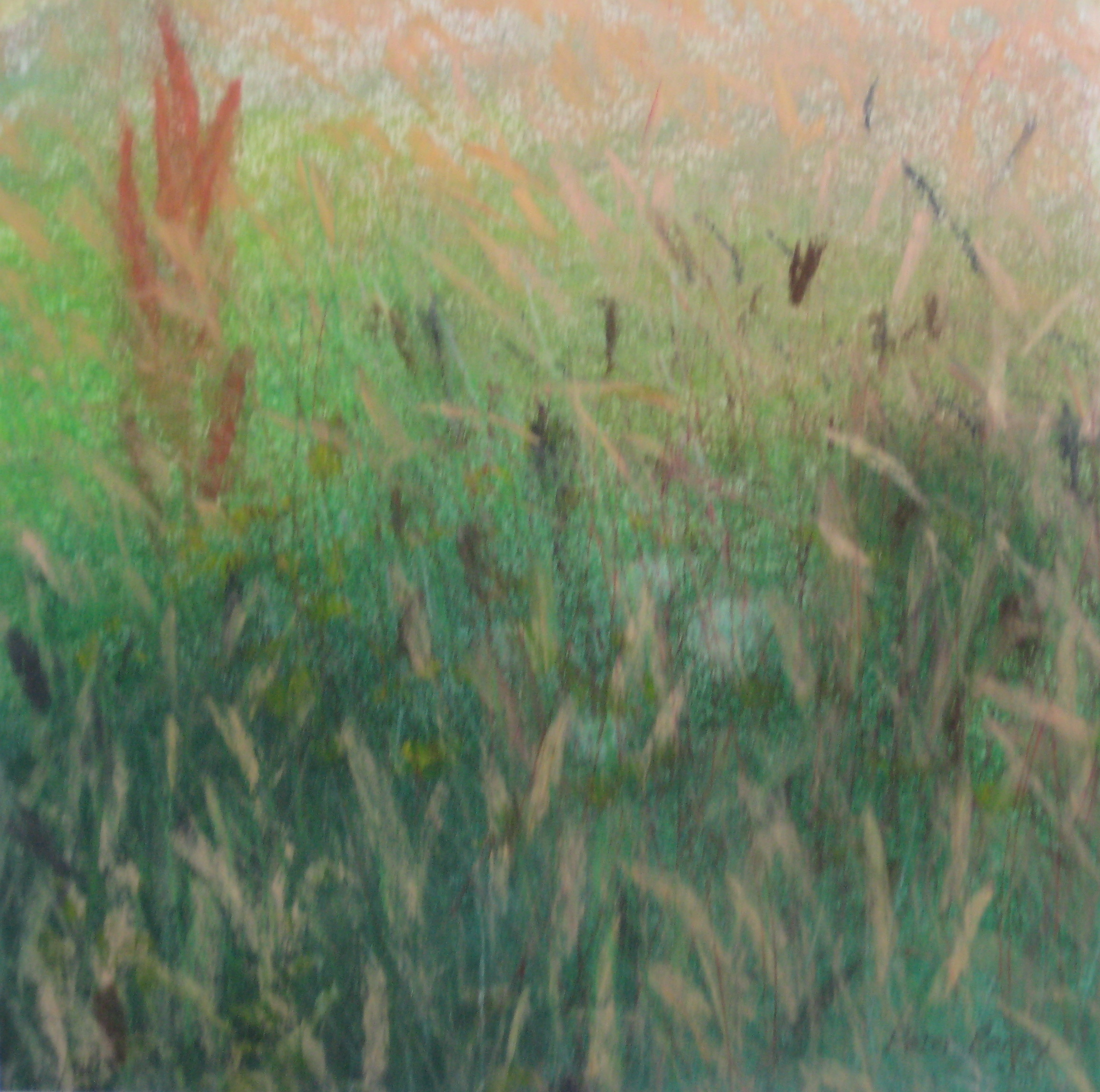 SUMMER GRASSES I