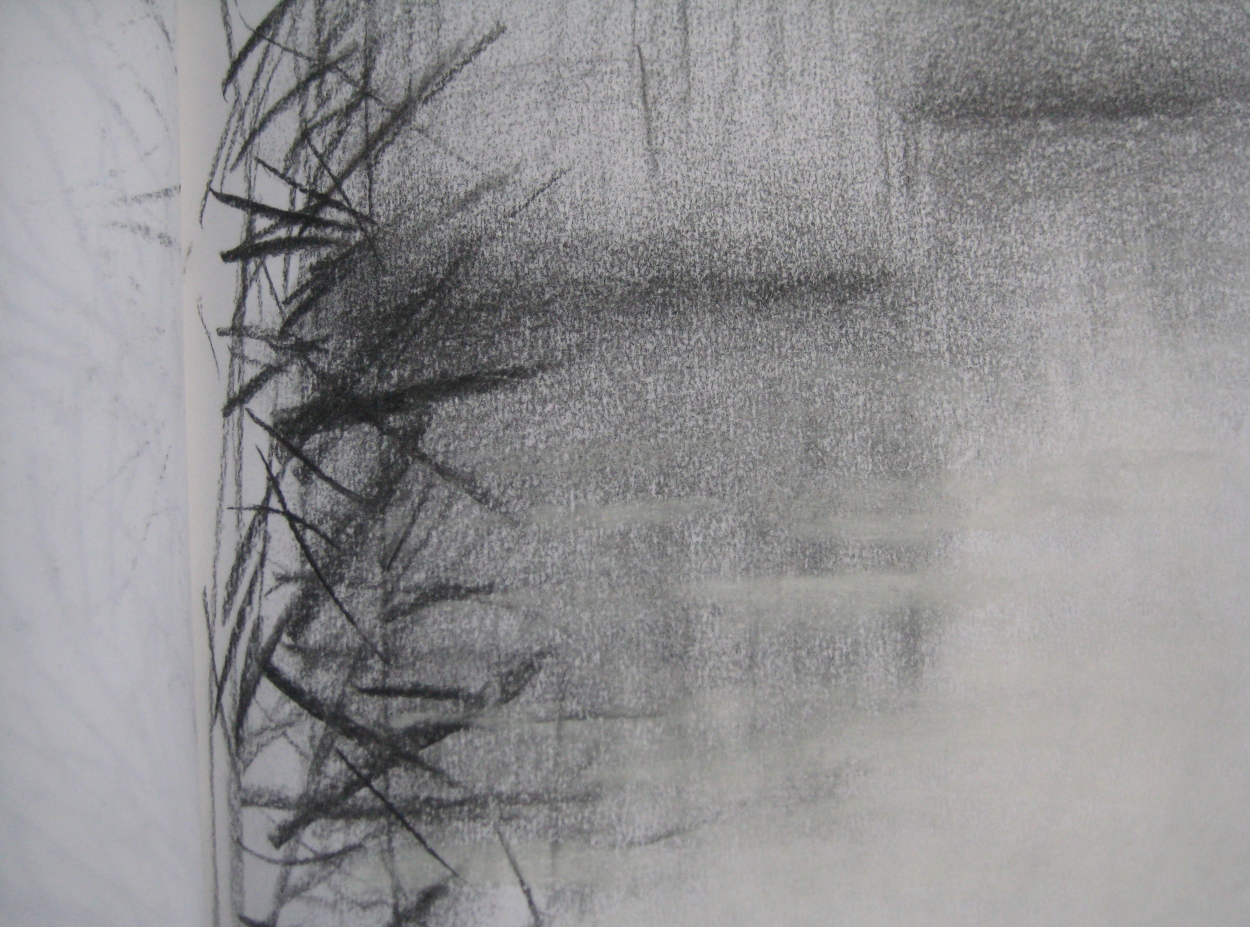 REED BED  Soft pencil