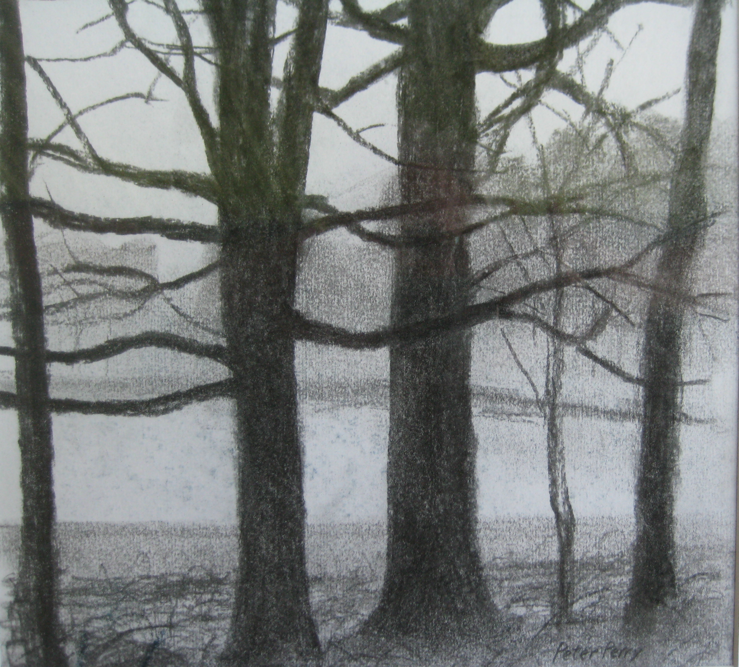 "TREES, WINTER  Approx 12X12"" (30X30cm)  Charcoal on paper   Sold"