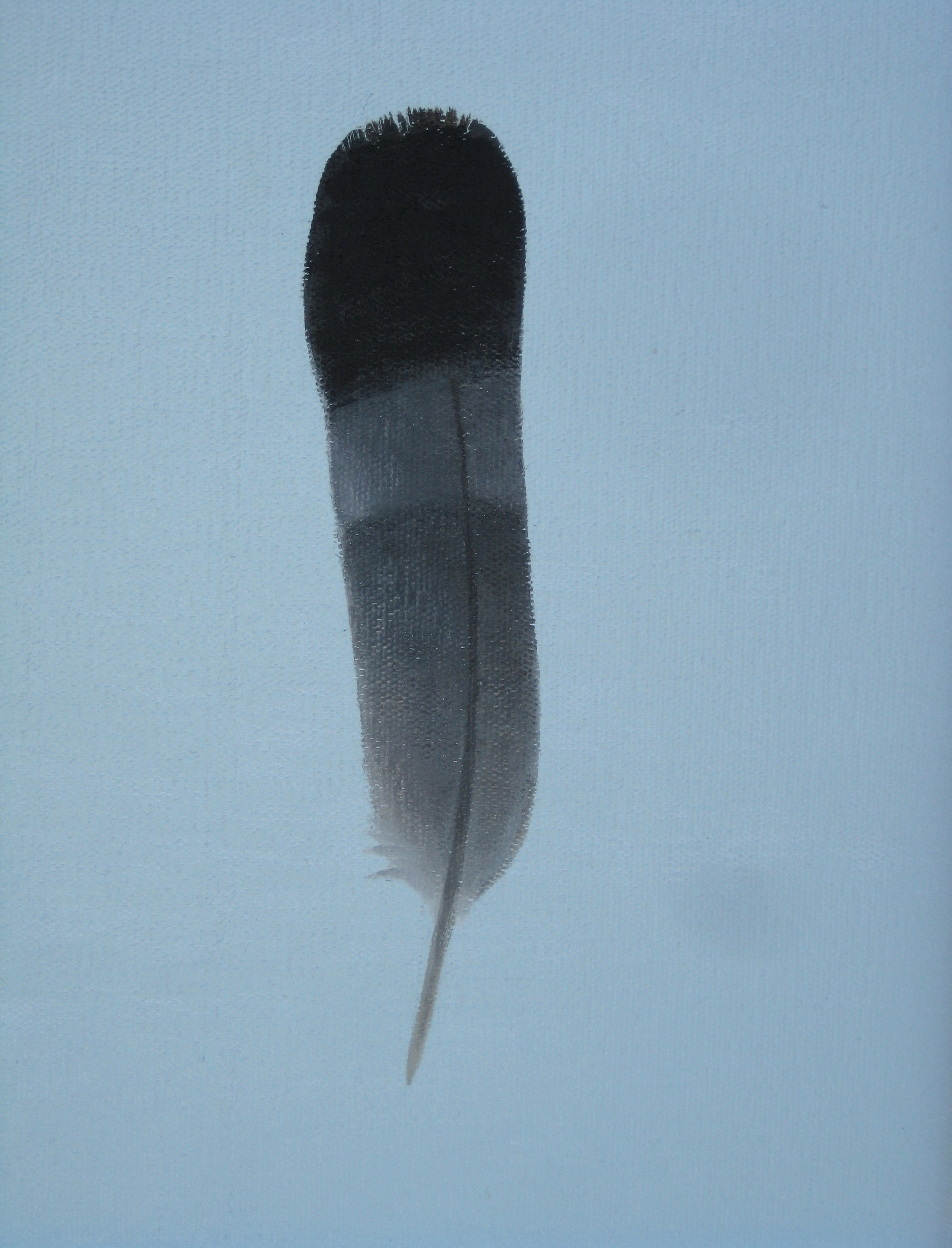 Pigeon feather (dark)