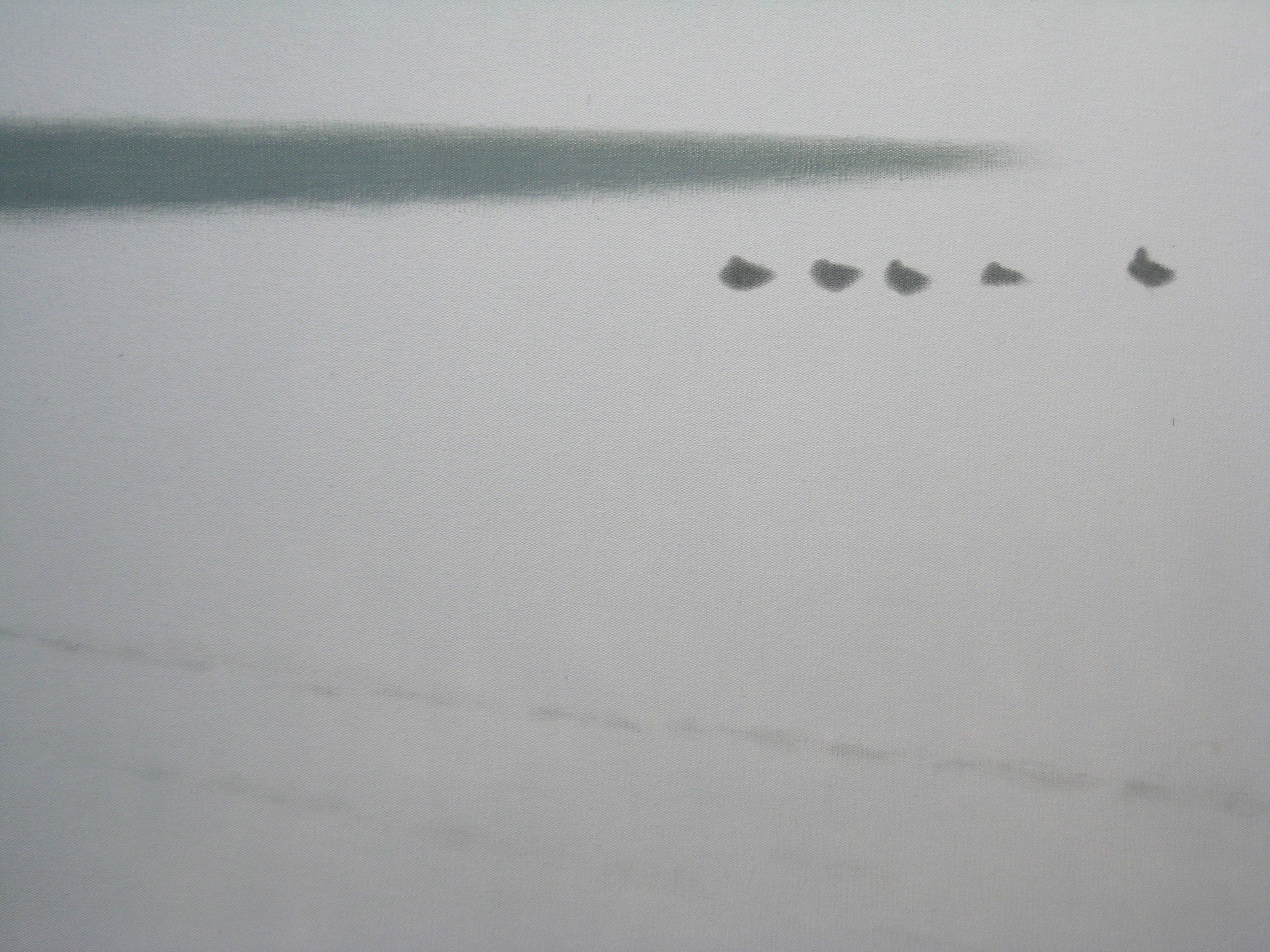 Birds, midwinter, Normandy
