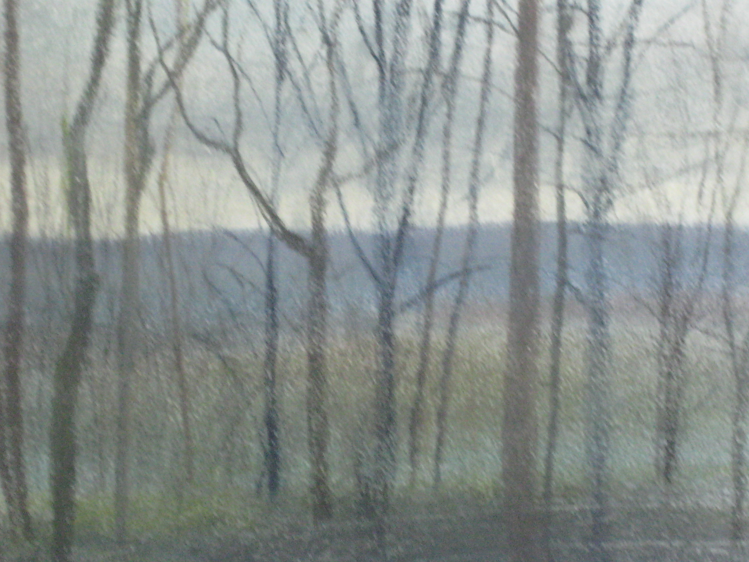 TREES, WINTER, NORMANDY
