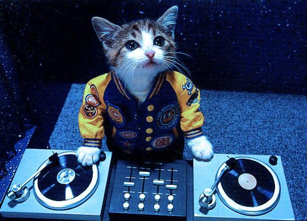 catDJ.jpg