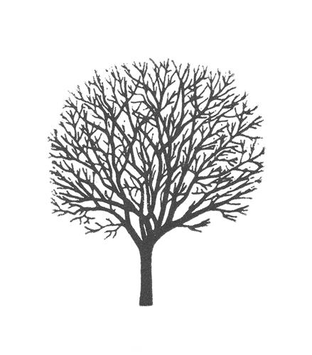 gianni tree gray.jpg