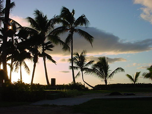 Photo from Wikimedia Commons: Hawaii native palm trees in silhouette by Catatonique