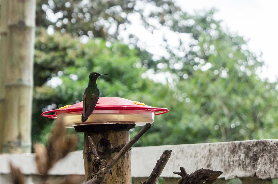 Humming bird watching