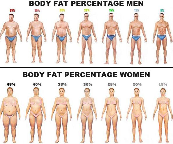 body fat percentage health