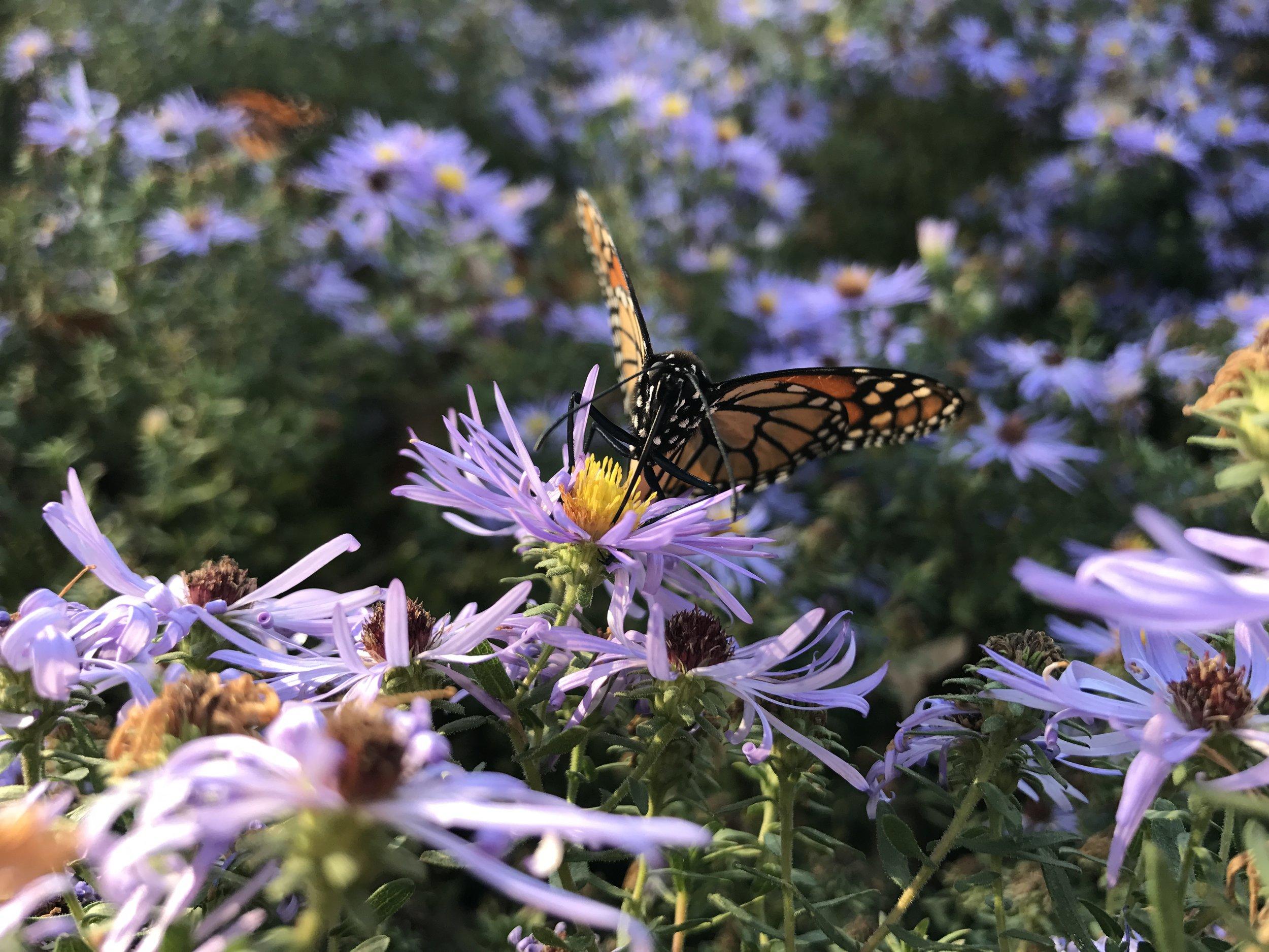 Bay Ridge Botanical Gardens