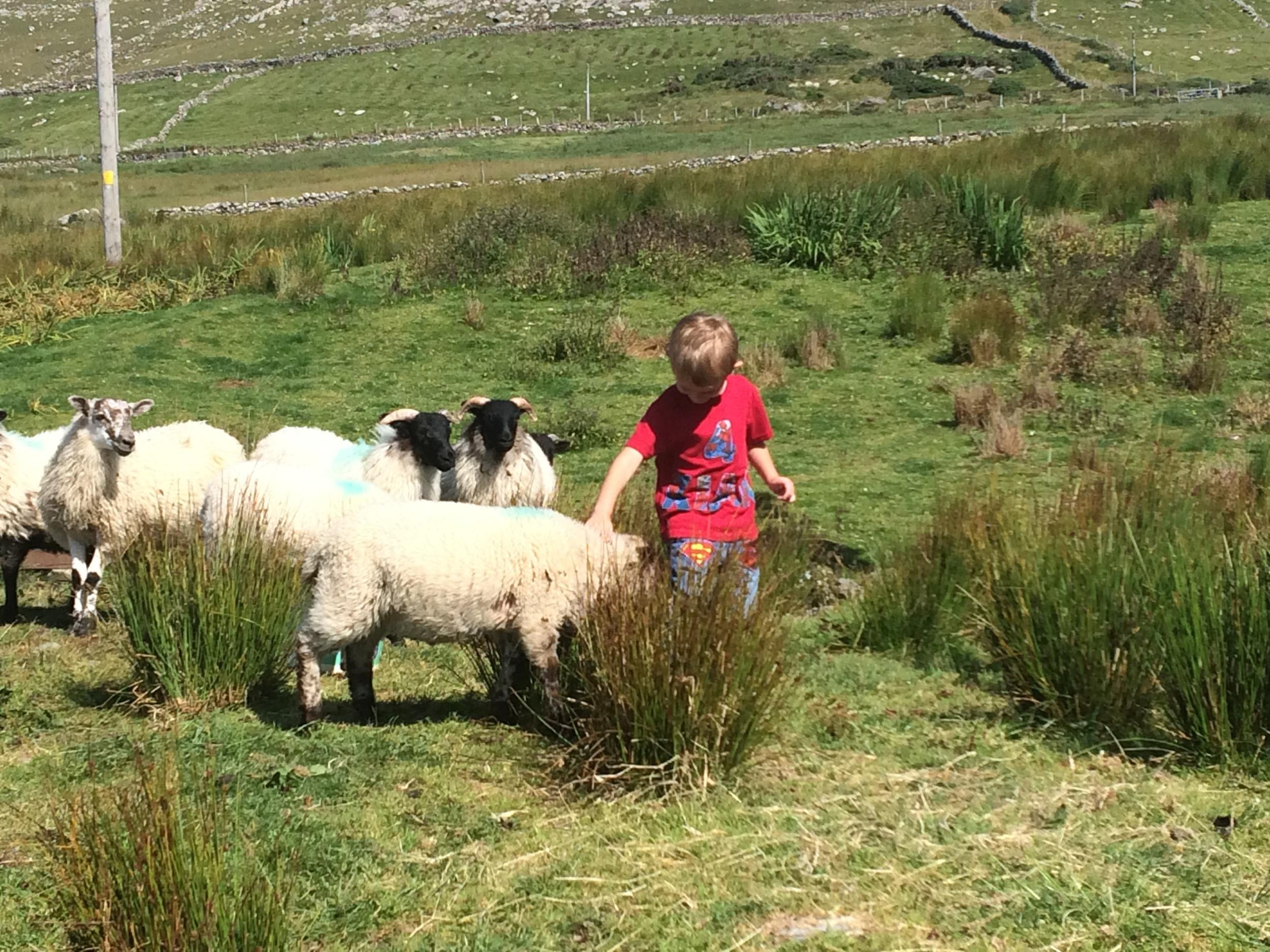 Kian with the Pet Lambs