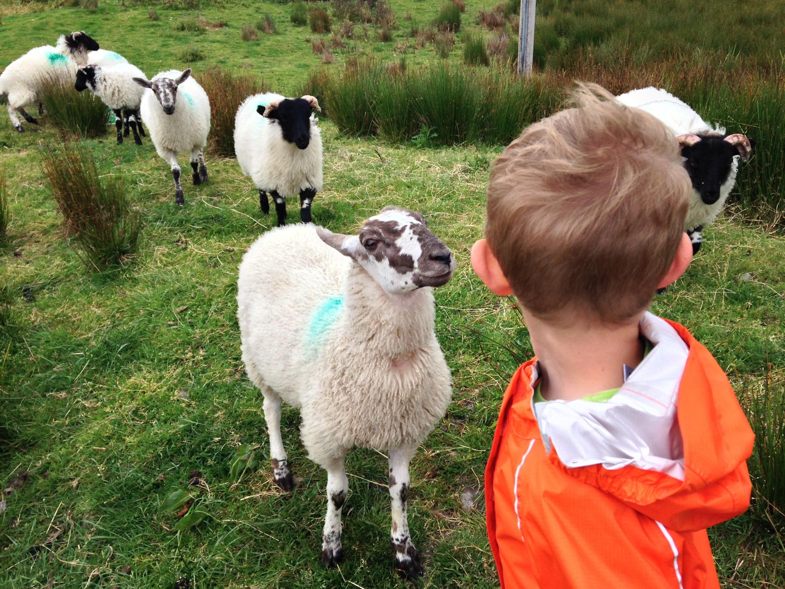 Kian visiting the pet lambs