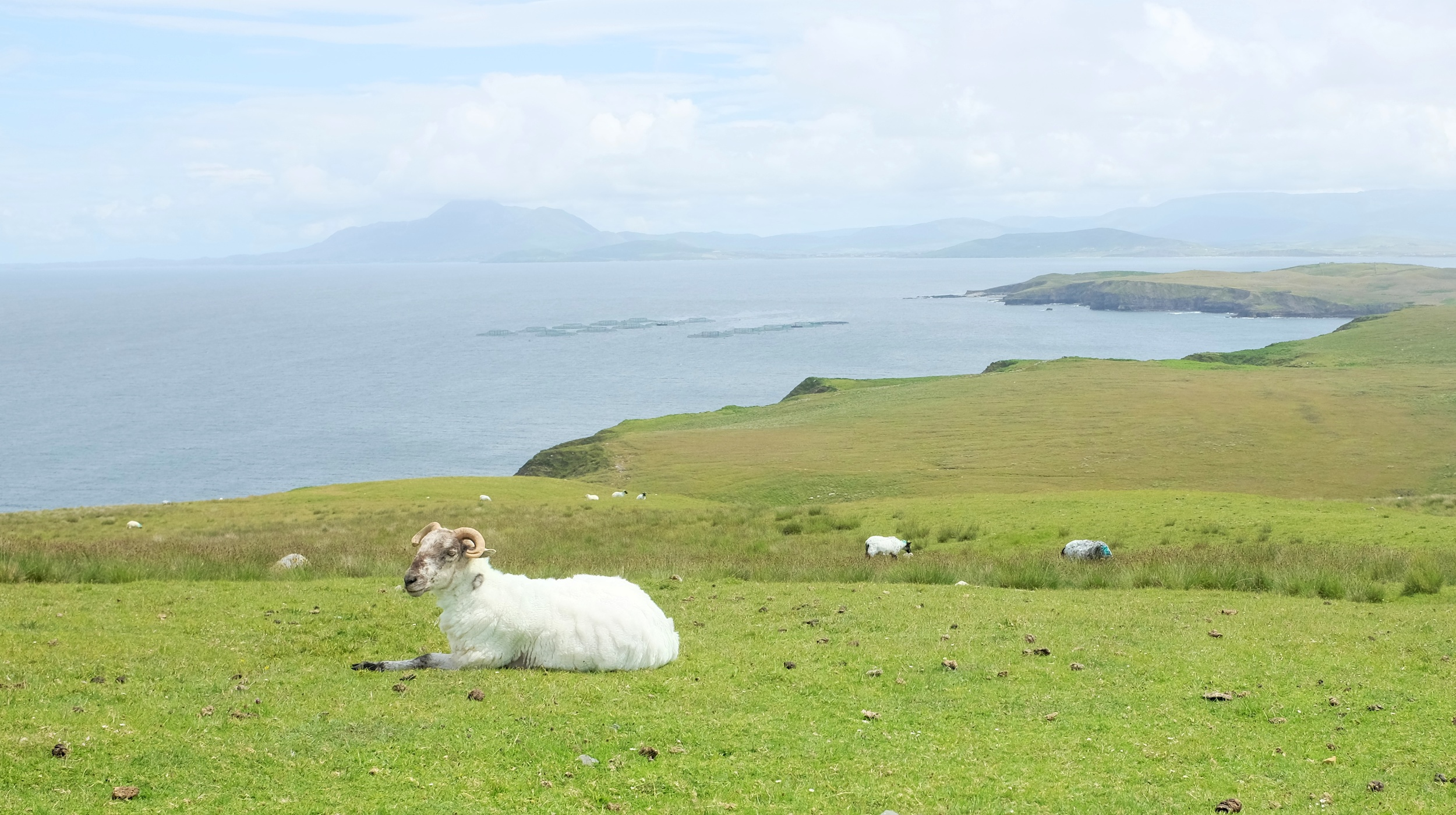 A sheep posed for our picture without being disturbed