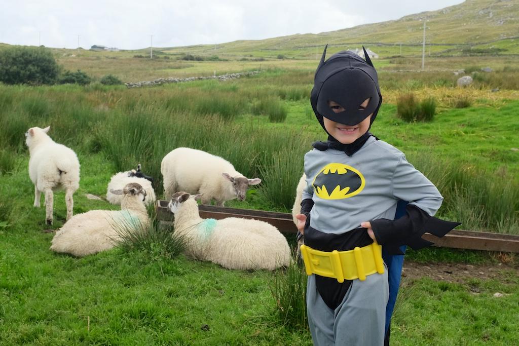 Batman visiting the pet lambs