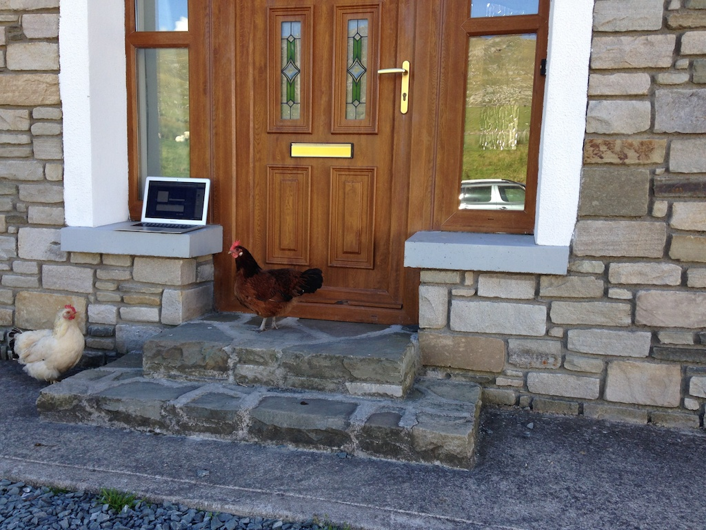 Chickens checking out the laptop