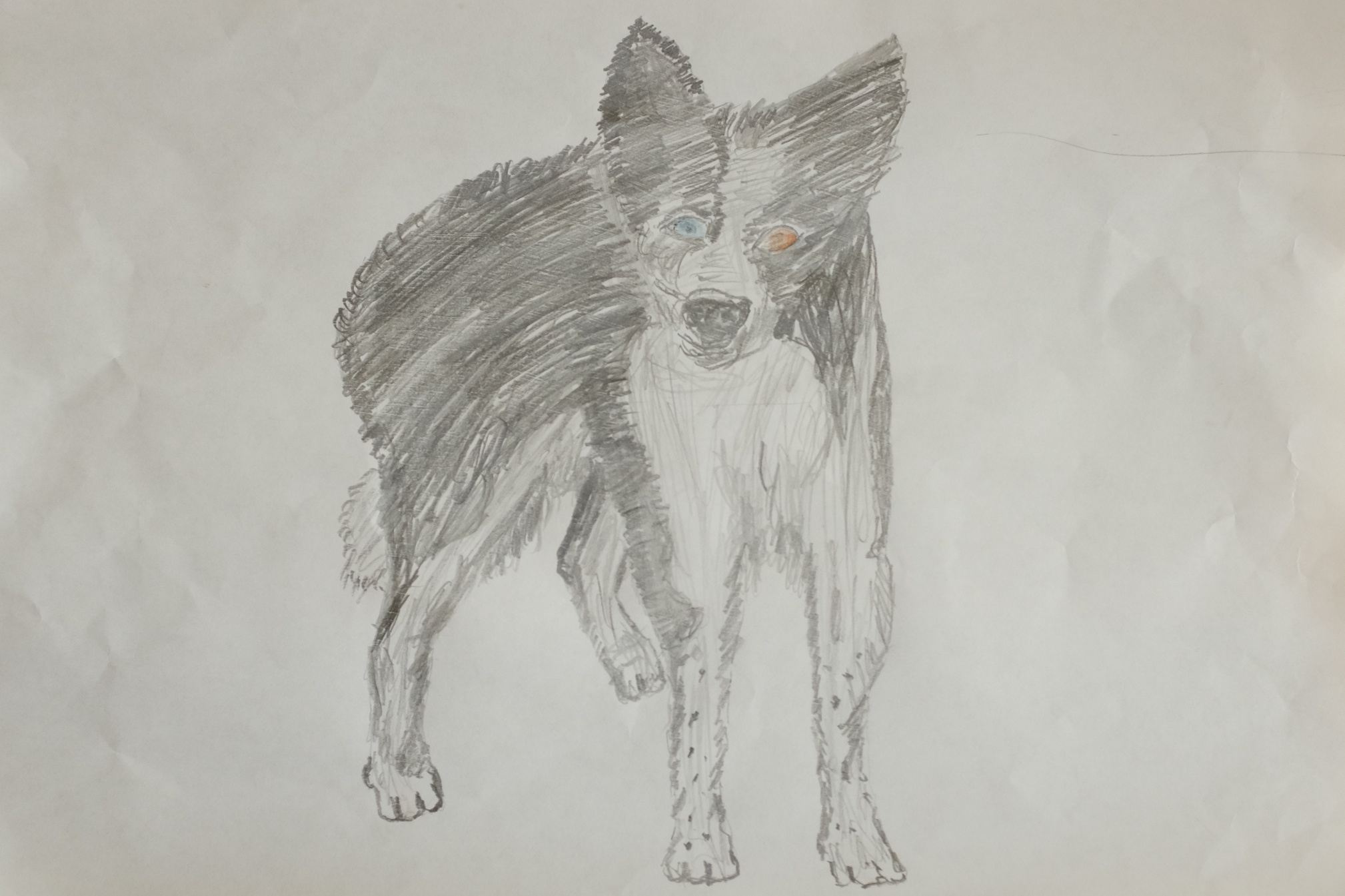 Picture of Sam drawn by Richard (Sam's owner)