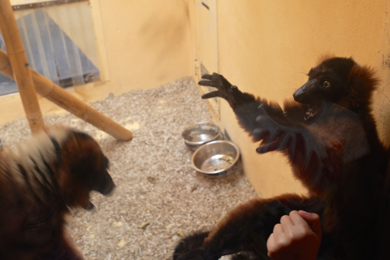 Kung fu monkeys?