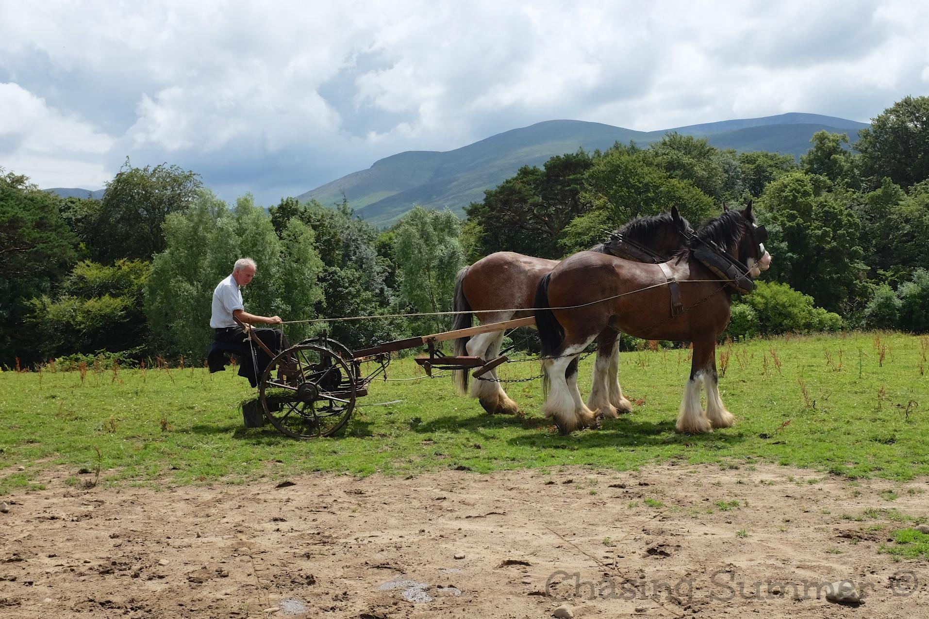 Traditional Farms