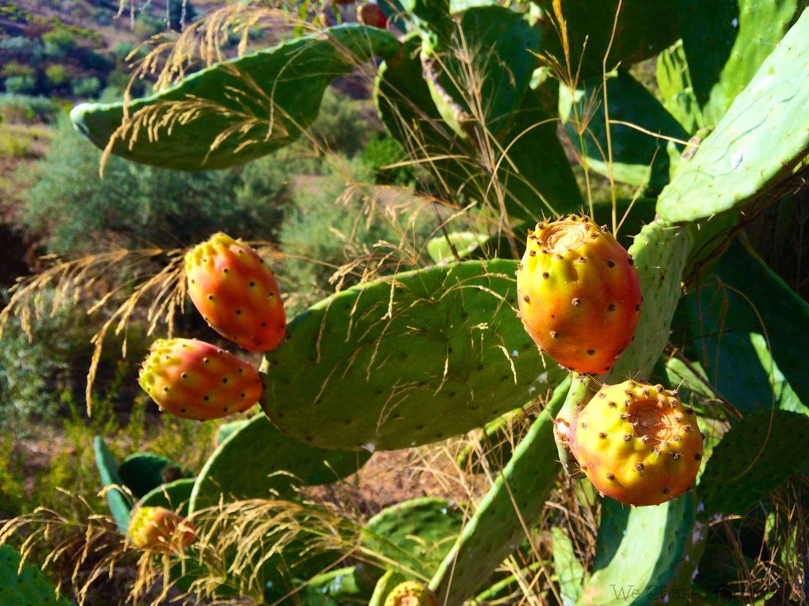 Prickly fruits
