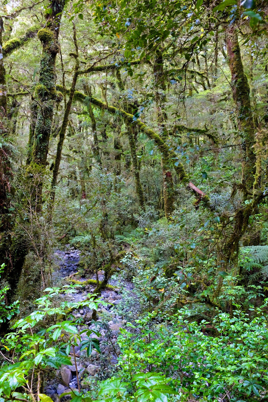 South Island Rainforests
