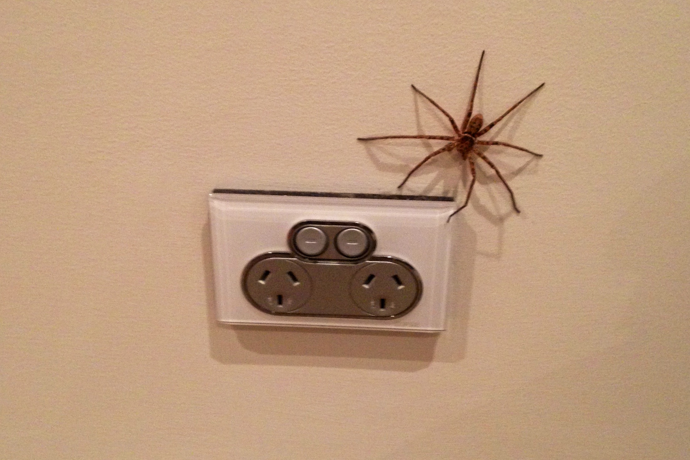 The spiders in Australia are the creatures of nightmares!  Thankfully hubby smushed this monster before he ate us all!