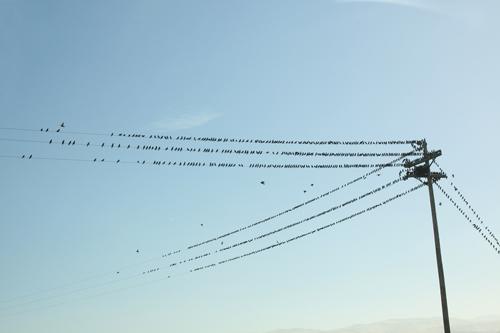BirdonaWire-web.jpg