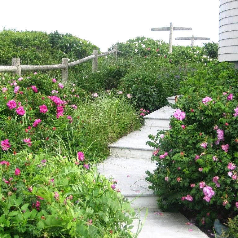 Firebaugh side garden square crop.jpg