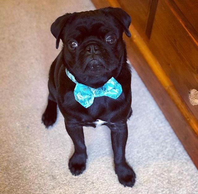 edward kwan handmade dog bow ties melbourne australia.jpg