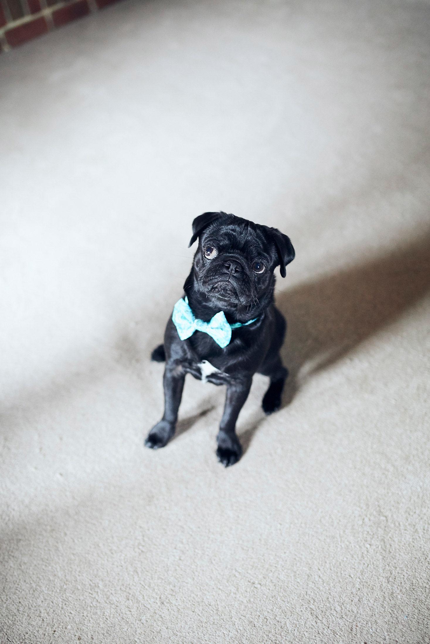 edward kwan custom dog bow ties melbourne australia.jpg
