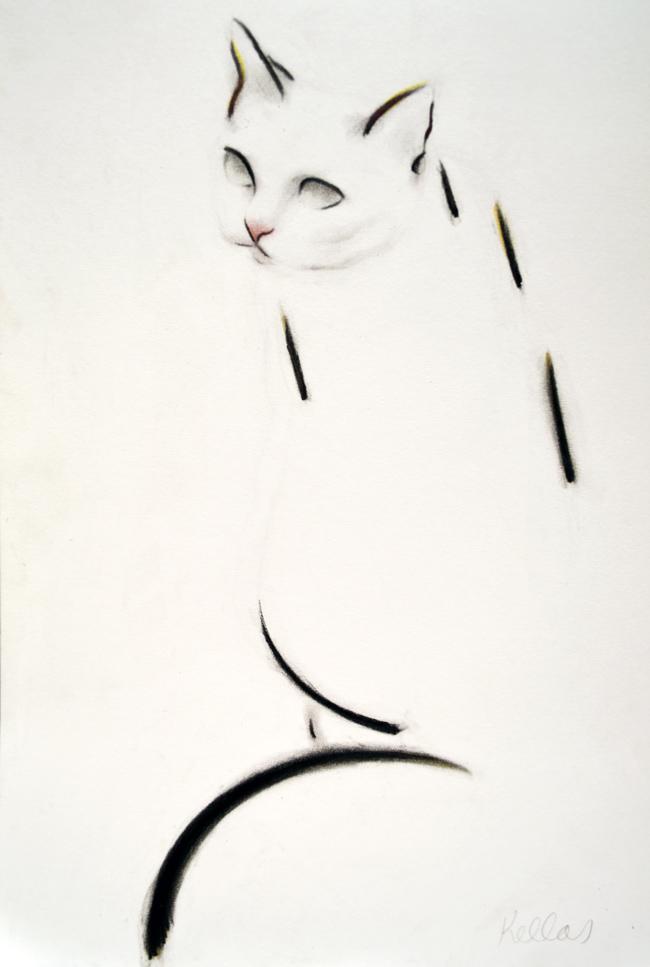 Dash Cat