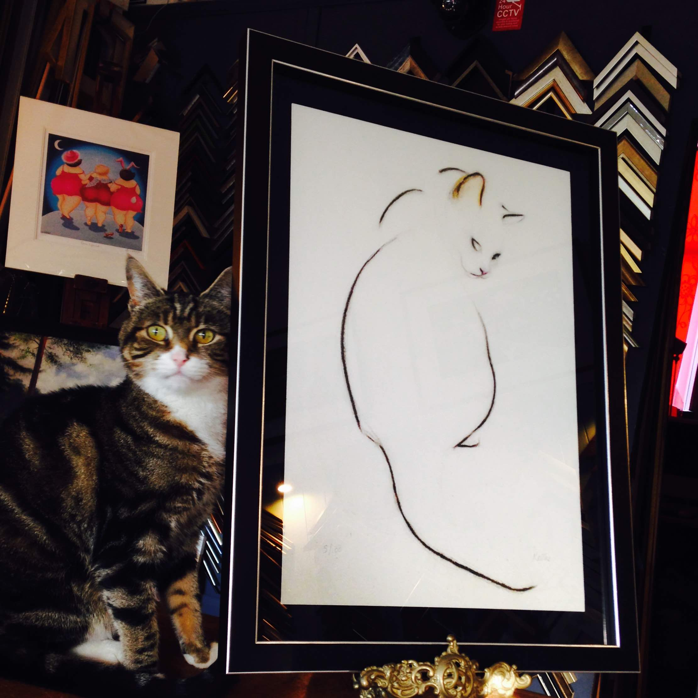 I absolutely love how Frith Frames in Surrey framed their 'Cat Looking Over Her Shoulder' print!! It's a float mounted on black brushed velvet in a lovely deep black and silver frame.  Gorgeous! Especially when paired with a handsome cat. :)