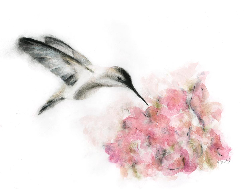 united_hummingbird2_w2.jpg