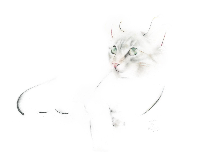 Luka the Kitten