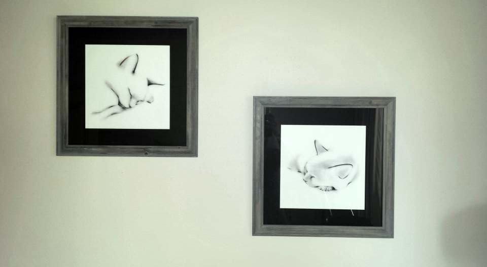 framed cats.jpg