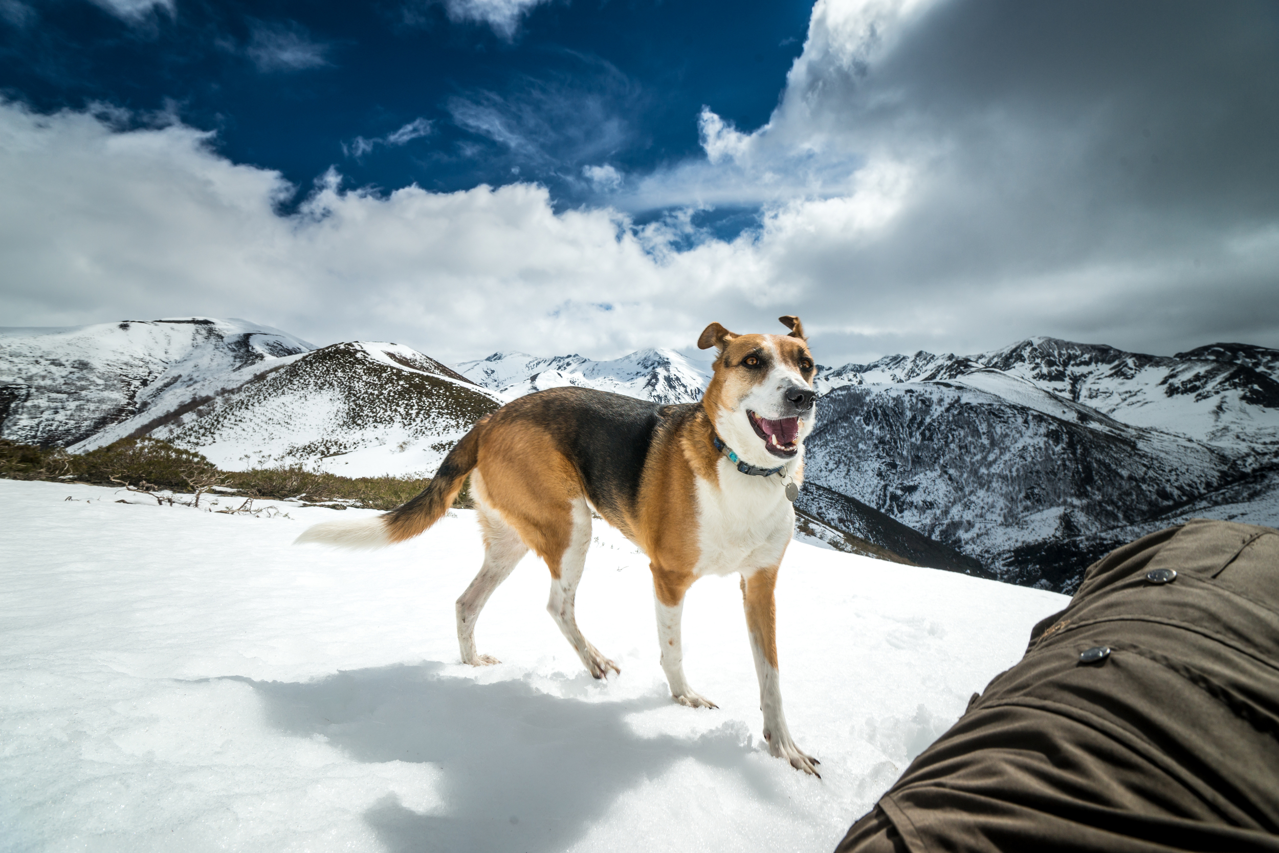A hound on top of the world. . .