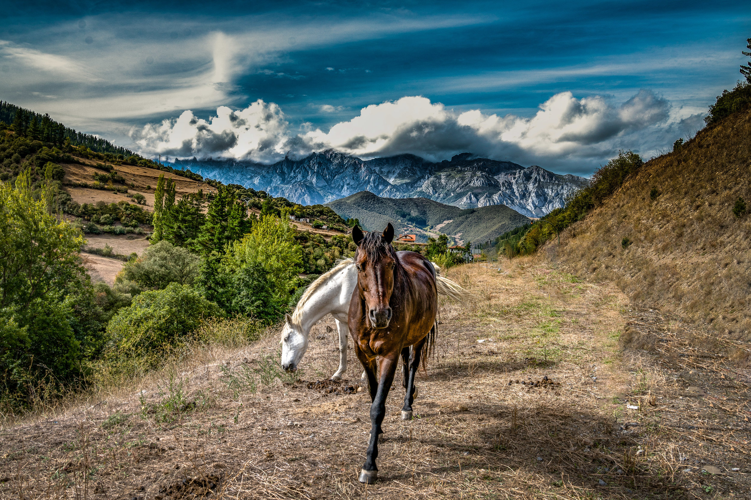 Ponies and the Picos
