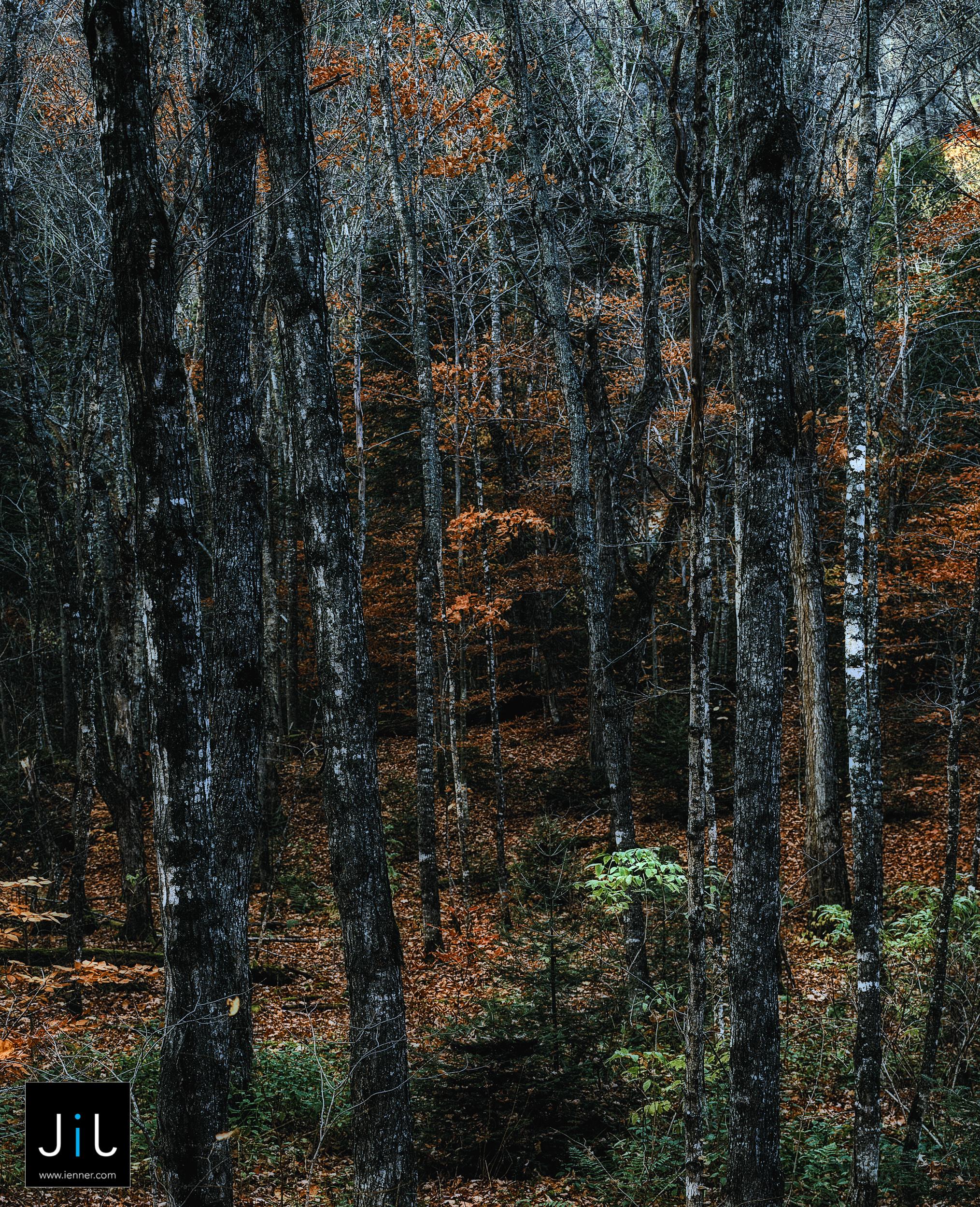 Landscape - Maine