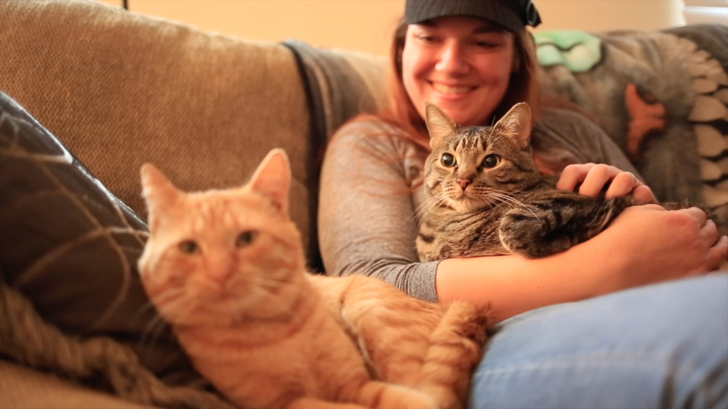 Two very happy, pampered FIV cats. See them in the video!