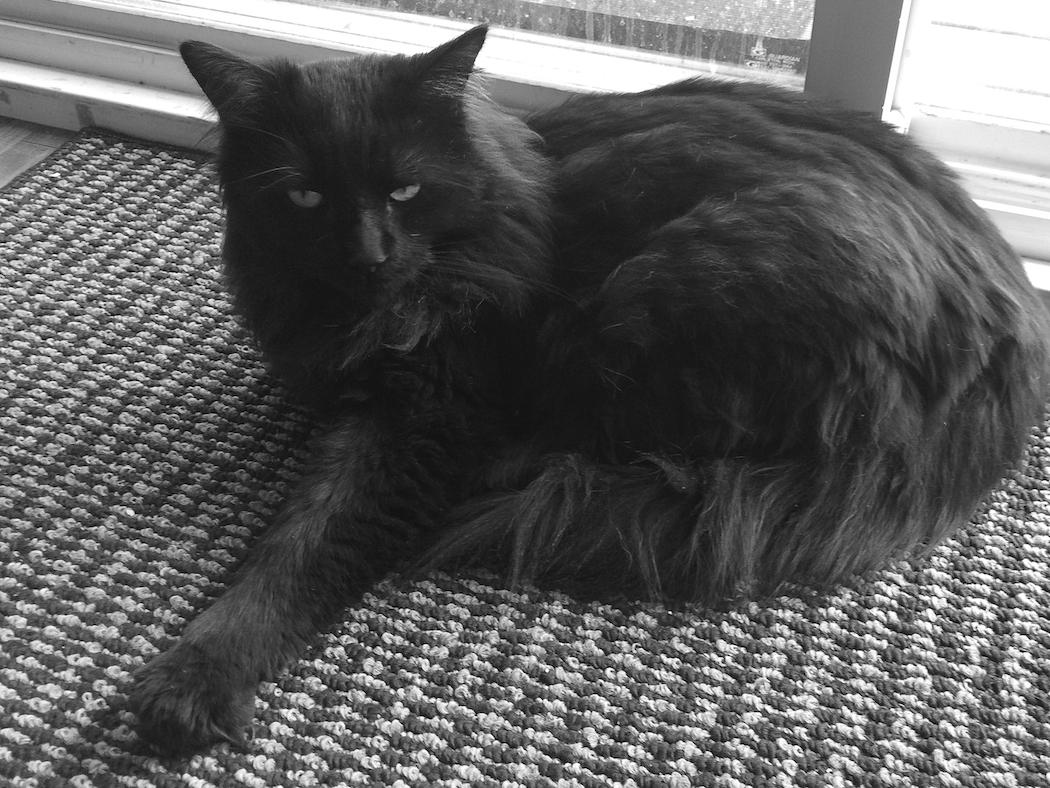 cathy's FIV cat